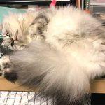 猫も寝顔を見られるのはイヤらしい