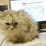 人間は猫のご機嫌を取りながら生きるのです